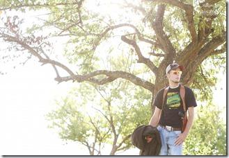 blog-tree